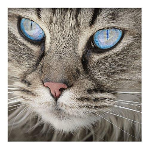 Blue Eyed Cat - Refrigerator Magnet