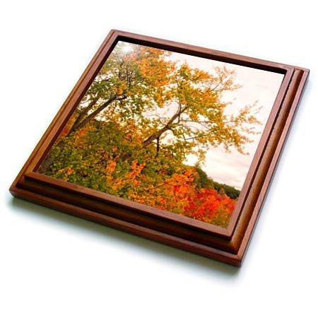 3dRose Boehm Photography Season Fall - Autumn Tree of Gold - 8x8 Trivet with 6x6 ceramic tile trv_268047_1