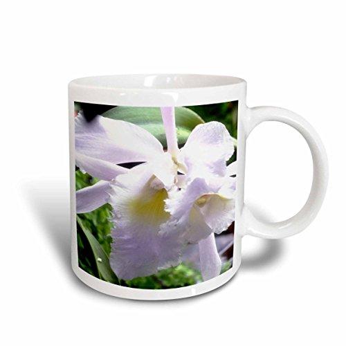 3dRose mug_179647_2 A Soft Beautiful Lavender Colored Orchid Flower Ceramic Mug 15-Ounce